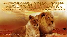 lion roar #avatar #luxury #poster