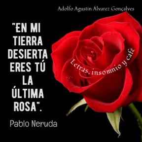 Tú, la última rosa