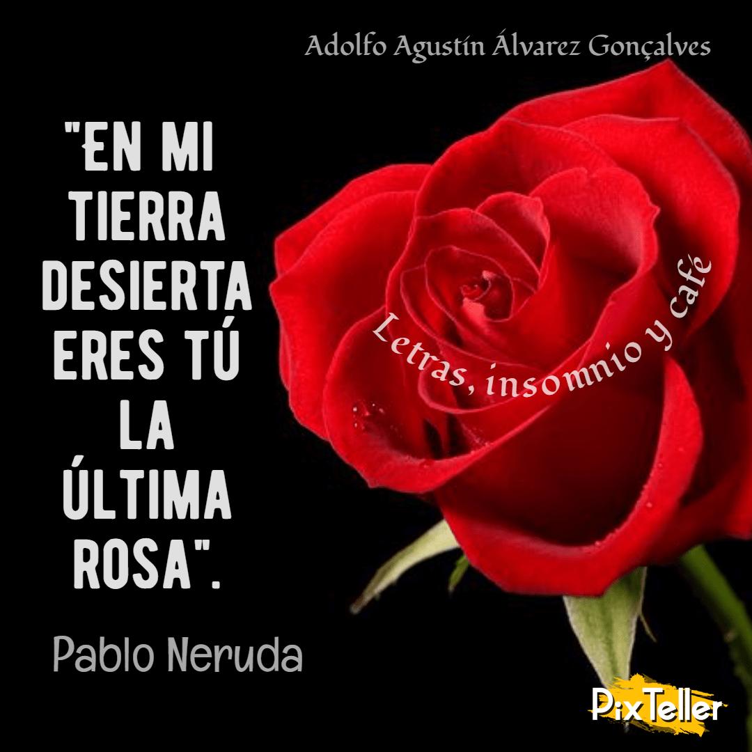 Rose,                Garden,                Roses,                Family,                Flower,                Love,                Order,                Petal,                Valentine's,                Day,                Flowering,                Plant,                Font,                 Free Image