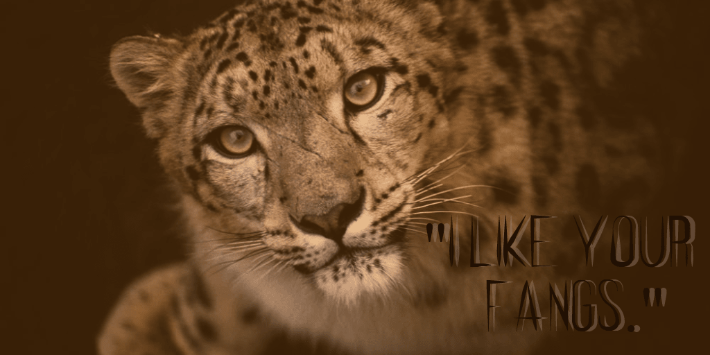 Wildlife,                Leopard,                Mammal,                Fauna,                Whiskers,                Cat,                Like,                Terrestrial,                Animal,                Big,                Cats,                Snout,                Cheetah,                 Free Image