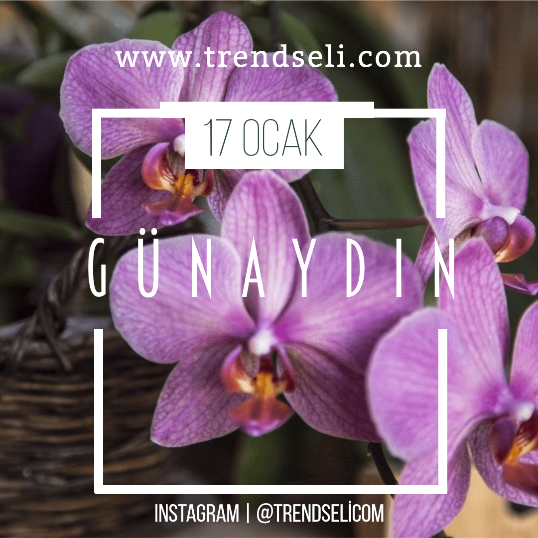 Flowering,                Plant,                Flower,                Purple,                Violet,                Flora,                Moth,                Orchid,                Phalaenopsis,                Equestris,                Petal,                Invitation,                Summer,                 Free Image