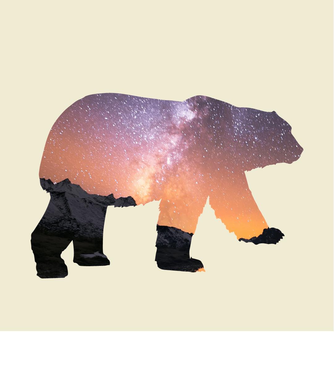 Mammal,                Bear,                Snout,                Carnivoran,                Organism,                Terrestrial,                Animal,                Polar,                White,                 Free Image