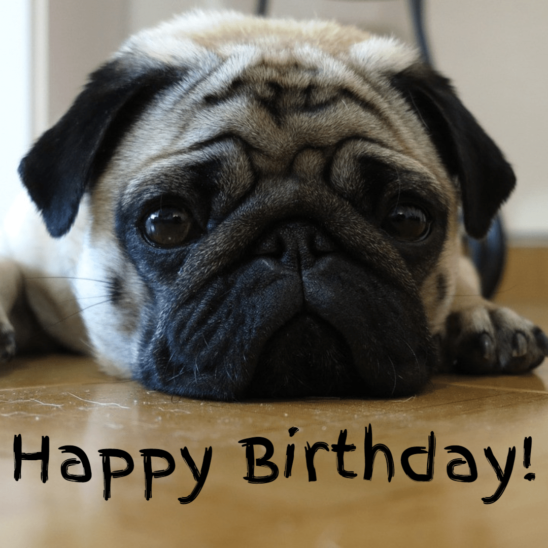 Mary Neff Pug Happy Birthday