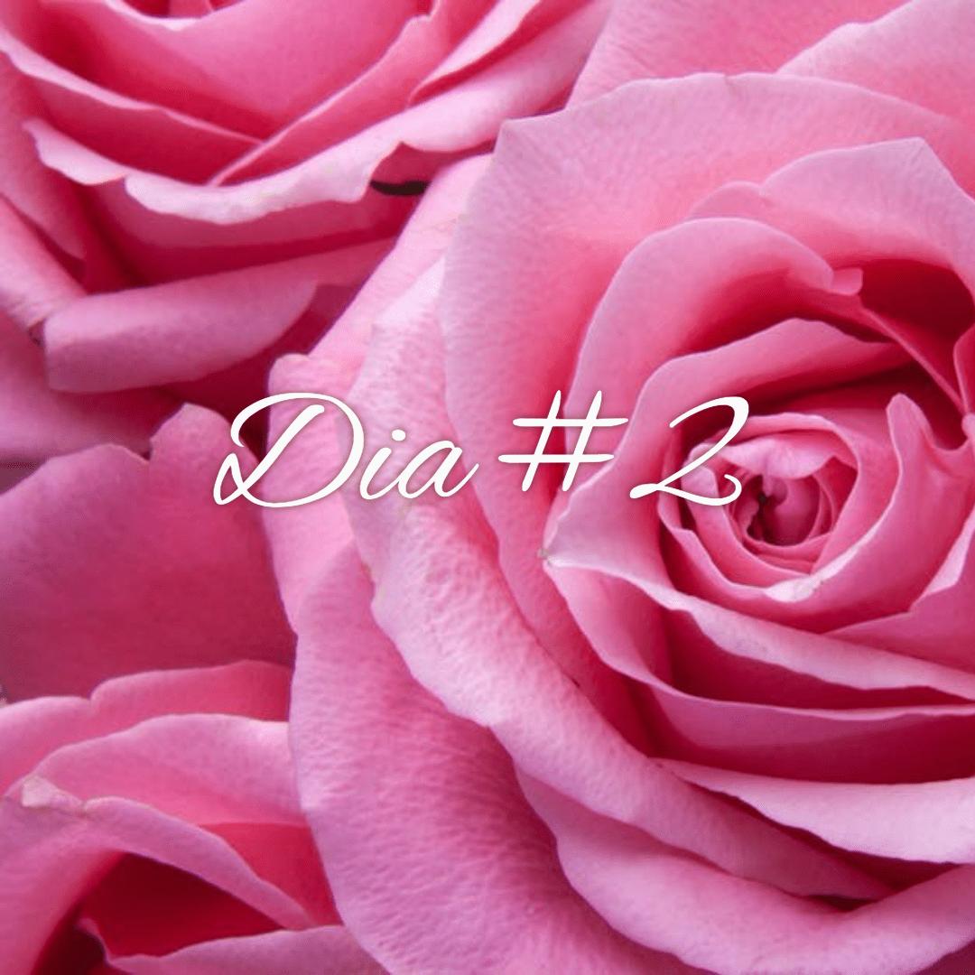 Rose, Pink, Flower, Family, Garden, Roses, Floribunda, Petal, Rosa, Centifolia, Order, Close, Up,  Free Image