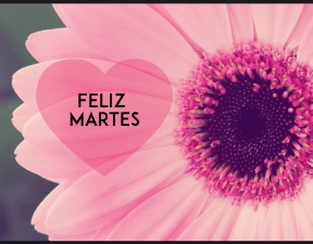 #positiva #gente #motivacion #martes #frases #quotes