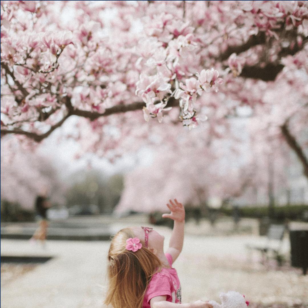 Flower, Blossom, Pink, Spring, Cherry, Plant, Branch, Tree, Petal, Girl, Fundoparafotosdostory, Talmeninatalbonecamanaus2, White,  Free Image