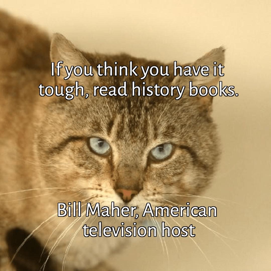 Cat,                Fauna,                Photo,                Caption,                Small,                To,                Medium,                Sized,                Cats,                Whiskers,                Like,                Mammal,                Tabby,                 Free Image