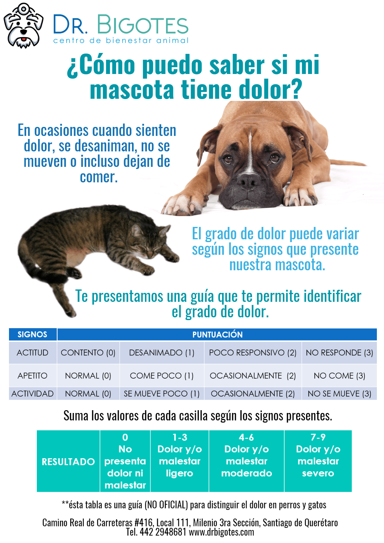 Dog,                Like,                Mammal,                Breed,                Puppy,                Carnivoran,                Snout,                Product,                Companion,                Font,                Graphics,                White,                Aqua,                 Free Image