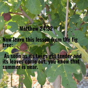Learn from the fig tree.