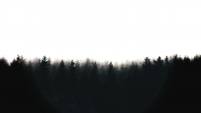 #Photo #Effects #Filters #ImageEffect #PhotoFilters #atmosphere #mist #fog #horizon #phenomenon #tree #sunlight #forest #sky