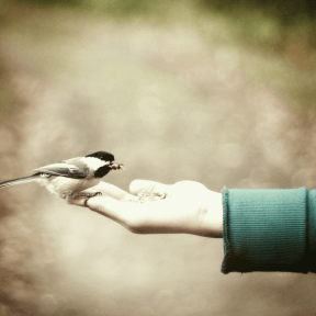 #Photo #Effects #Filters #ImageEffect #PhotoFilters #coraciiformes #hand #wildlife #tail #with #Small #beak #wren
