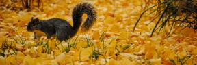 #Photo #FreePhoto #flora #grass #squirrel #animal #family #wildlife #UNSPLASHIMAGE #autumn #terrestrial #fauna