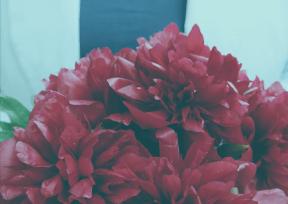 #Photo #FreePhoto #bouquet #flower #floral #arranging #rose #plant