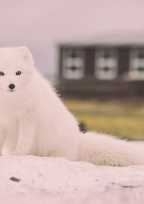 #Photo #FreePhoto #mammal #like #fox #canadian #breed #dog