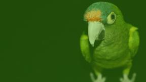 #Photo #FreePhoto #parrot #with #pet #lovebird #against #parakeet #fauna #organism #Green