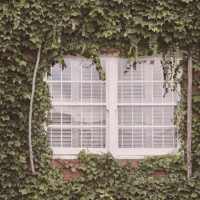 #Photo #FreePhoto #plantation #house #UNSPLASHIMAGE #wall #home #grass #tree #plant