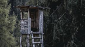 #Photo #FreePhoto #UNSPLASHIMAGE #cottage #old #house #hut #growth #forest #forest #structure