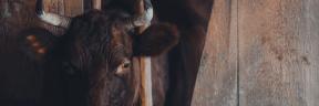 #Photo #FreePhoto #goat #cow #fauna #UNSPLASHIMAGE #dairy #family #livestock