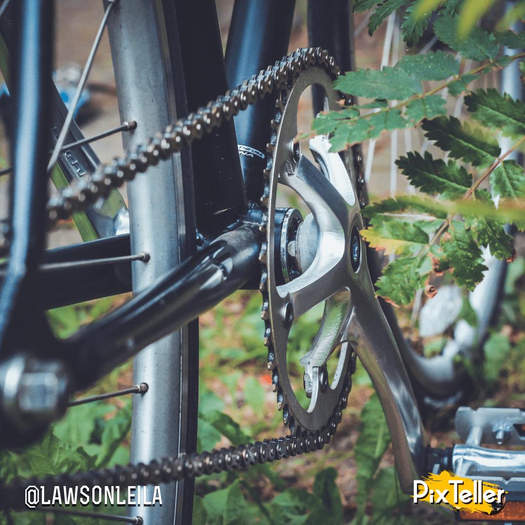 Bicycle,                Mountain,                Bike,                Road,                Freeride,                Tree,                Spoke,                Vehicle,                Tire,                Frame,                Wheel,                Show,                Fur,                 Free Image