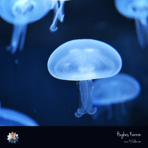 #follow #photo #UNSPLASHIMAGE #black #labels #invertebrates #biology #circular #jellyfish #worker