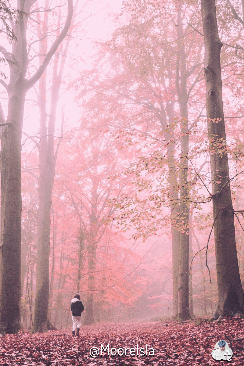 Pink,                Forest,                Woodland,                Tree,                Branch,                Morning,                Sky,                Phenomenon,                Sunlight,                Winter,                Path,                Beanie,                Logo,                 Free Image