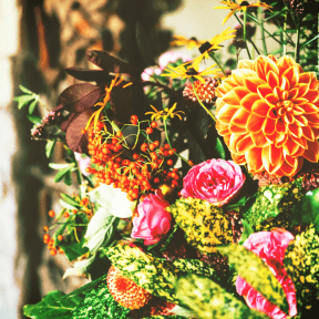 #Photo #Effects #Filters #ImageEffect #PhotoFilters #flowering #spring #plant #flower #plant #peonies #annual
