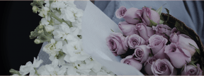 #Photo #Effects #Filters #ImageEffect #PhotoFilters #lilac #floral #design #white #flower #rose