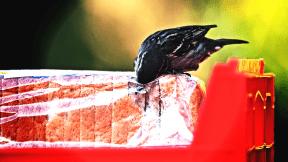#PhotoEffect #Photo #PhotoFilter #Effects #Filters #Photography #fauna #organism #wing #beak #bird