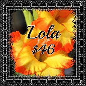 lola yellow