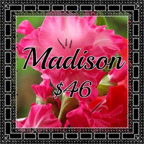 Madison pink