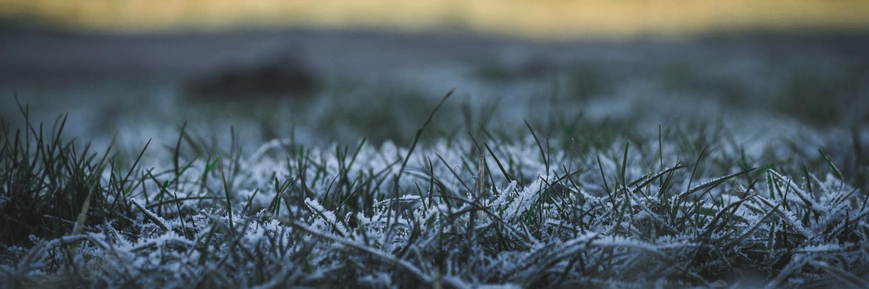Frost,                Ecosystem,                Atmosphere,                Freezing,                Grass,                Vegetation,                Morning,                Tundra,                Family,                Sunlight,                Resources,                Water,                UNSPLASHIMAGE,                 Free Image
