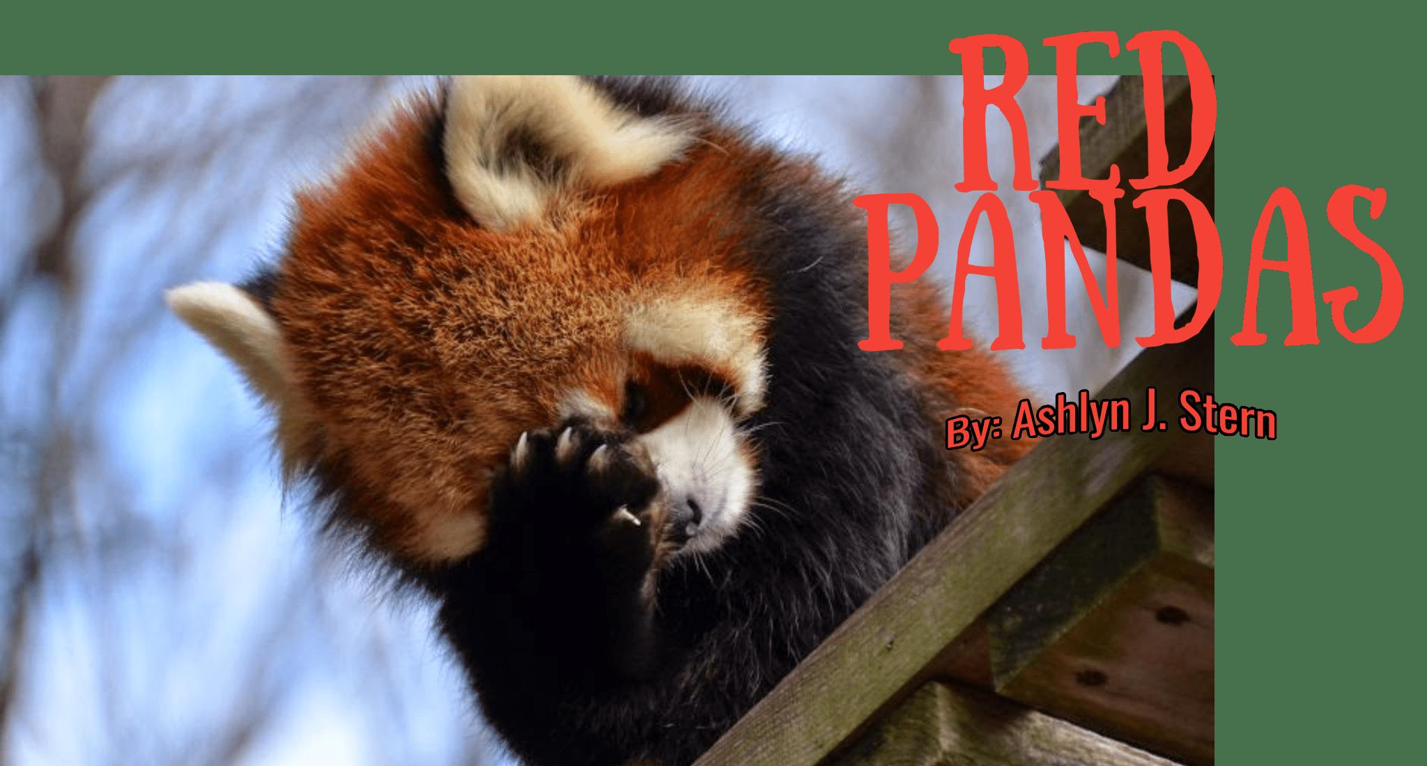 Red Panda Panda Cute Image Customize Download It For Free