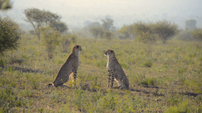 Photo - #Photography #Photo #savanna #grassland #nature #mammal #fauna #animal #wilderness