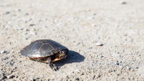 Photo - #Photography #Photo #animal #turtle #box #emydidae #reptile