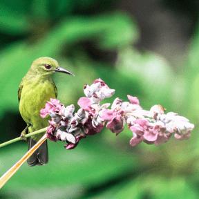 Photo - #Photography #Photo #finch #beak #bird #world #flycatcher #fauna #organism #old