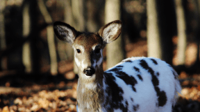 Photo - #Photography #Photo #musk #wildlife #deer #organism #white #animal #snout #fauna
