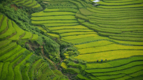 Photo - #Photography #Photo #plantation #vegetation #landscape #terrace #organism #station #agriculture