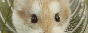 Photo - #Photography #Photo #rodent #snout #mouse #muridae #hamster #dormouse #whiskers #gerbil