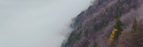 Photo - #Photography #Photo #wilderness #green #with #ridge #station #tree #mist