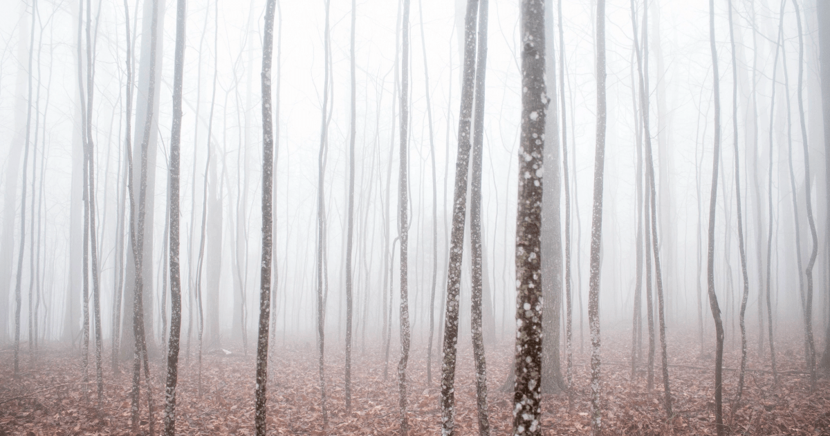 Wood,                Tree,                Fog,                Forest,                Branch,                And,                Thick,                Winter,                With,                Floor,                Brown,                A,                White,                 Free Image
