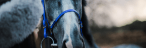 Photo - #Photography #Photo #mustang #horse #mane #tack #stallion #halter
