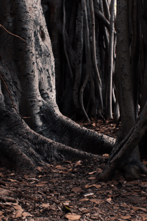 Photo - #Photography #Photo #formation #root #woodland #forest #trunks