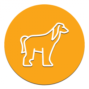 Icon Graphic - #SimpleIcon #IconElement #breed #mammal #shapes #circle #add #animal