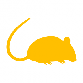 Icon Graphic - #SimpleIcon #IconElement #side #animal #kingdom #silhouette #rats #rat #view