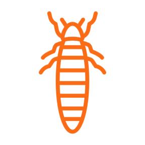 Icon Graphic - #SimpleIcon #IconElement #entomology #animal #animals #insect #bug #Lampyridae