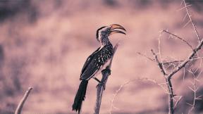 Photo Filter - #PhotoEffect #PhotoFilter #PhotographyFilter #ecosystem #A #bird #yellow #ecoregion #hornbill #beak #black