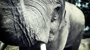 Photo Filter - #PhotoEffect #PhotoFilter #PhotographyFilter #zoo #terrestrial #tusk #animal #mammal #and #indian