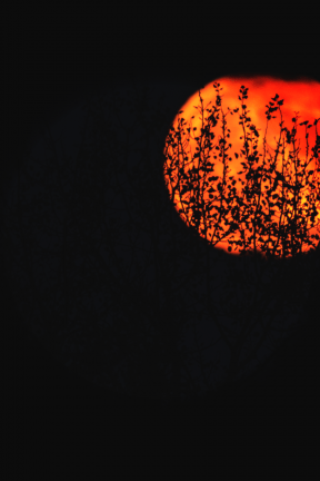 Photo Filter - #PhotoEffect #PhotoFilter #PhotographyFilter #seen #night #full #moonlight #astronomical #branches #Zagreb