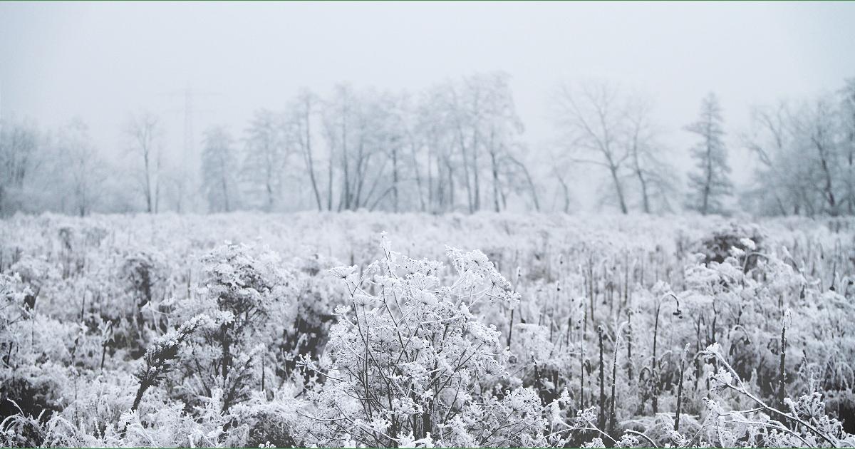 Winter,                Frost,                Snow,                Freezing,                Ecosystem,                Tree,                Grass,                Family,                Black,                And,                White,                Prairie,                Neumühl,                 Free Image