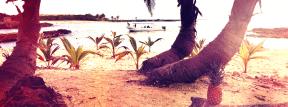Photo Filter - #PhotoEffect #PhotoFilter #PhotographyFilter #tree #beach #bent #vacation #trunk #sunlight #Mexico. #palm #tourism